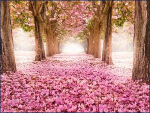 Пример фотообоев с цветами и аллеей
