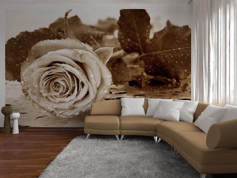 фотообои в комнату с большим цветком фото